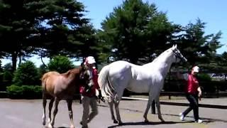 マンハッタンスカイ産駒当歳馬と母ノーザンジュン