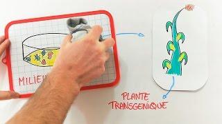 Comment fabrique-t-on un OGM ? [#SUPERDEBAT - Les OGM (3)]