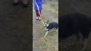 Собака из приюта Берегиня.Кличка Девочка