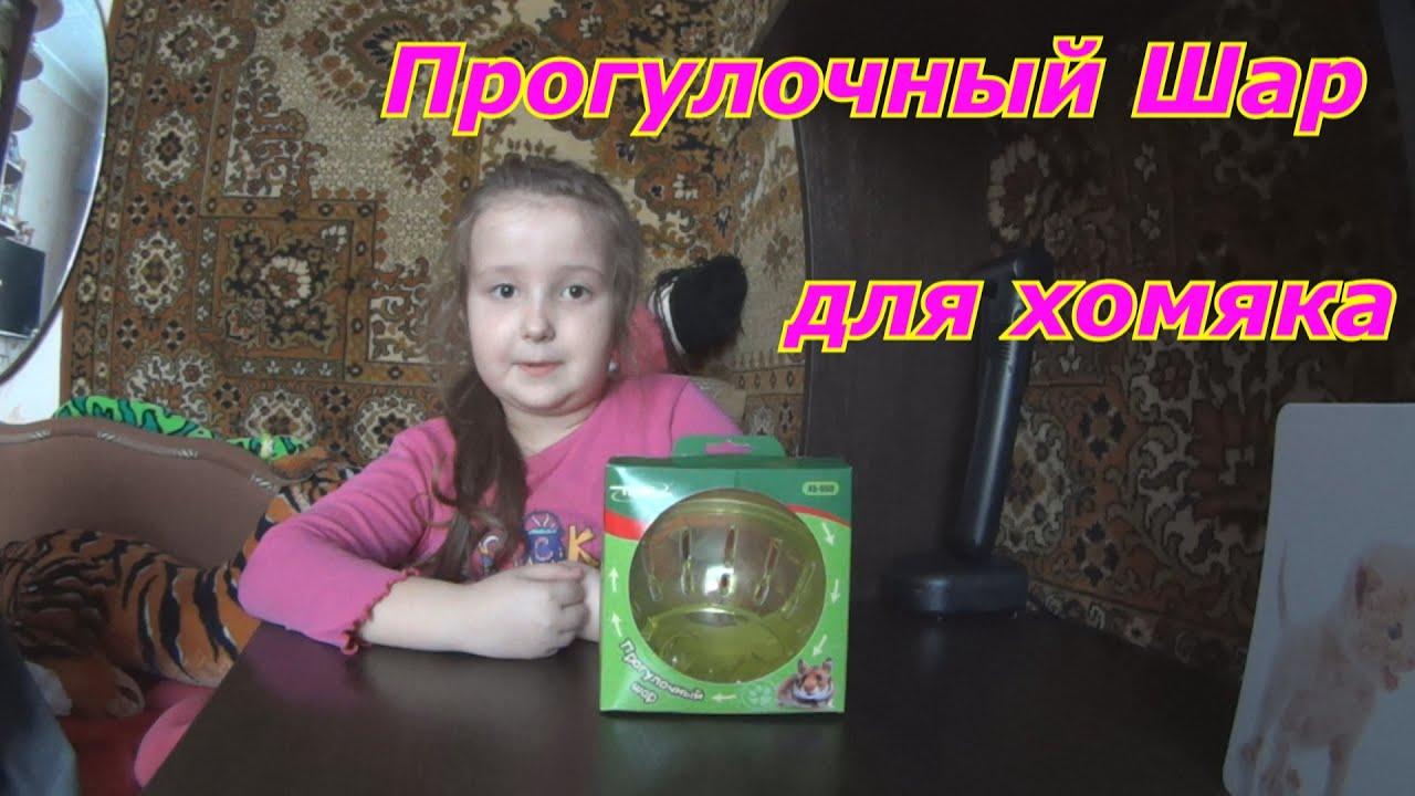 Amazoncom  Kaytee Critter Cruiser Small Animal Toy