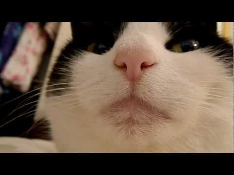 Serious cat judges you