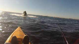 AMAZING!! Whale Jumps/Breaches next to Kayak Fisherman!! Seaside New Jersey