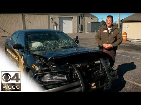 ROADKILL - Deer Vs Police Car.