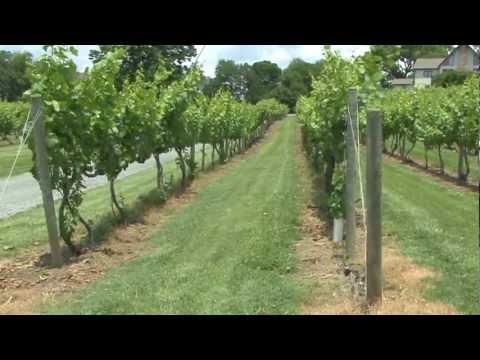 Hidden Gem Wine Regions of the U.S.