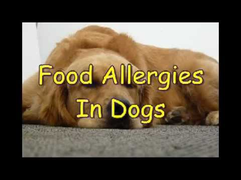 Food Allergies In Dogs, the most common dog food allergies.