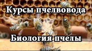 Курсы пчеловодства | Биология пчелиной семьи (Education beekeeping | Biology colony)