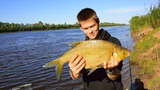 Ловлю Леща, Рыбалка - Лещ на Фидер (Рыбалка Видео) / fishing feeder bream – MF №64