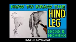 How to Draw the HIND LEG: Dogs & Horses