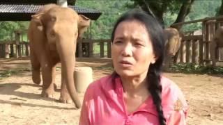 صغار الفيلة تتذوق أغنيات الأطفال وتنام عليها
