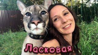 ЛАСКОВАЯ ПУМА / Котики и приметы