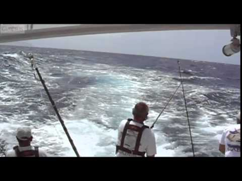 Blue Marlin World Record Fly Fishing