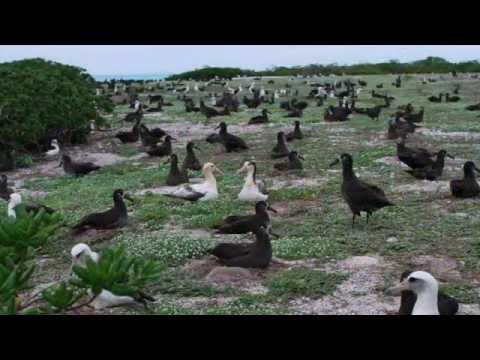 Kure Atoll Papahānaumokuākea Marine National Monument