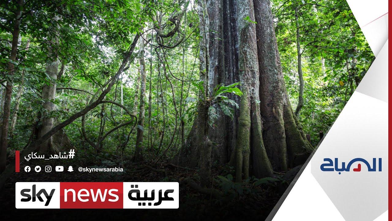 مجموعات للبيع بالتجزئة في أوروبا تهدد بمقاطعة البرازيل بسبب إزالة الغابات |#الصباح  - نشر قبل 4 ساعة