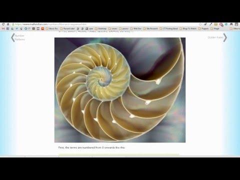 Fibonacci Sequence Delay in Ableton Live