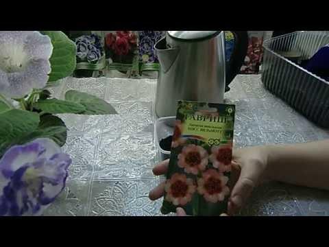 Лапчатка Непальская ! посев семян с кипятком и результат !
