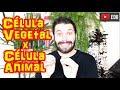 Célula Vegetal x Célula Animal - Principais Diferenças