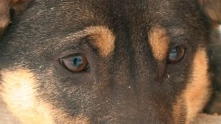 Собаки и кошки «Гвардии»