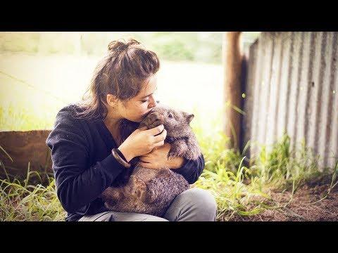 Cette fille est la meilleure amie des wombats - ZAPPING SAUVAGE