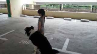 Waggie Dog Training - Valerie Wong (4 years old) first dog training session.