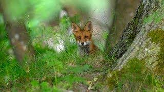 Весна в лесу. Прекрасная природа, животные и птицы.