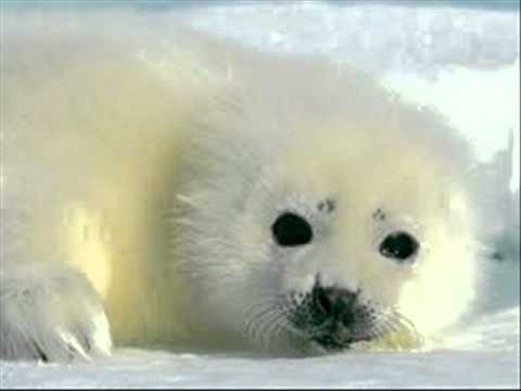 Jean Redpath - The Song Of The Seals.wmv