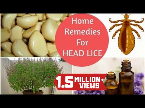 16 Home Remedies To Get Rid Of Lice Fast Lice Treatment Get Rid