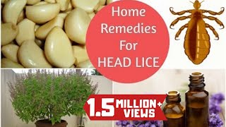 Top 5 Home Remedies To Get Rid Of Head LICE & Nits * Sushmita's Diaries