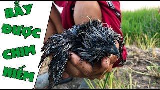 Lần Đầu Dẫn Team Trẻ Trâu Đi Bẫy Cò - Bẫy Được Chim Lạ - Bird Trap | anh ba phai tv