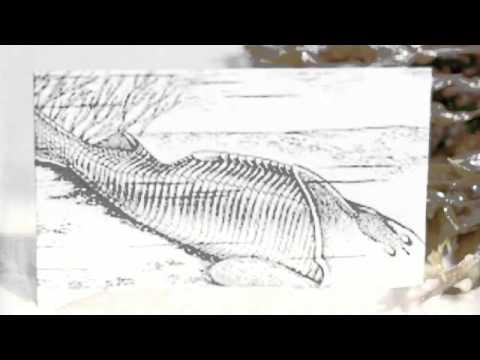 Ordovician Organisms