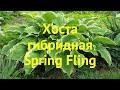 Хоста гибридная Спринг Флинг. Краткий обзор, описание характеристик hosta hybrida Spring Fling