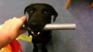 Harry Dog Carrying The Olympic Torch For Canine Communicatiions Dog Training, Gosport