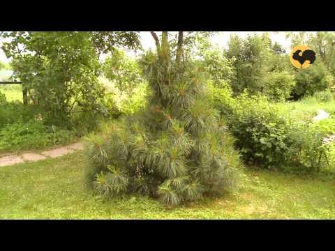 видео: Сад в сине-желтой гамме. Ландшафтные хитрости 80