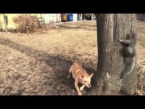 Dog Eats Squirrels