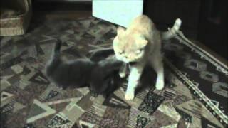 Коты играют(дерутся как будто) )))