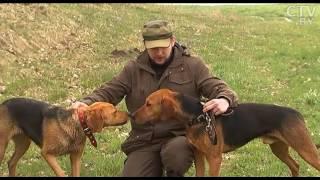 Национальный охотничий брэнд: какой он – наш белорусский гончак?