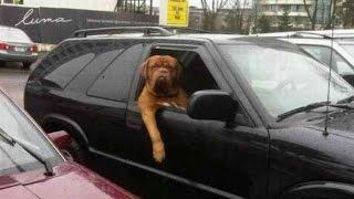 Increíbles y graciosas situaciones con tu perro en el coche