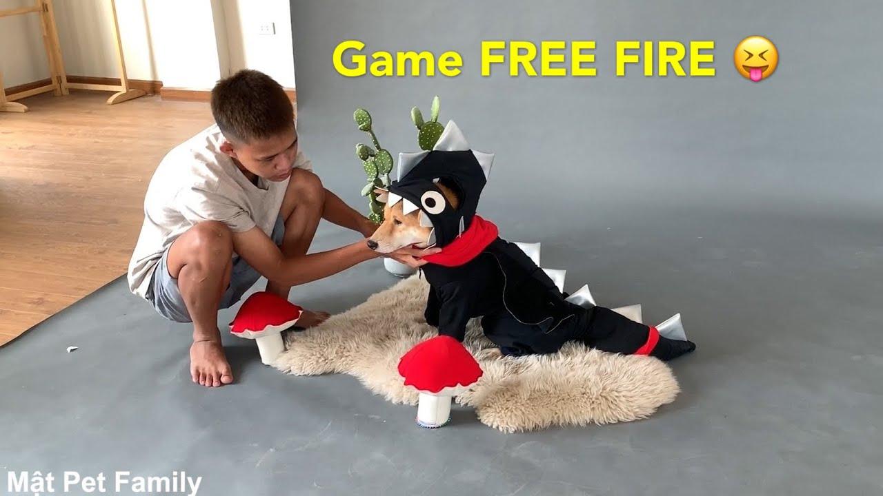 Shiba Vàng Làm Mẫu Ảnh Đại Diện Game FREE FIRE - HÓT HÒN HỌT Mật Pet Family