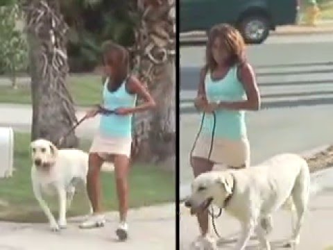 as-seen-on-tv:-secrets-to-training-the-perfect-dog-infomercial