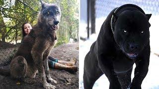7 Mascotas más intimidantes que existen