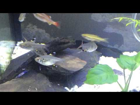 My Interpet Fish Pod Aquarium