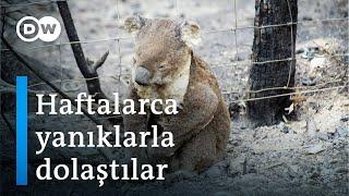 Avustralya yangınları: Ölen hayvanların sayısı 1 milyarı geçti - DW Türkçe
