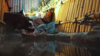 NOZARU HOSTEL in Shibu onsen thumbnail