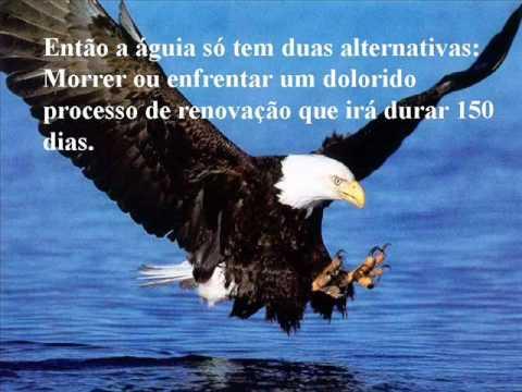 a renovação da águia | Doovi