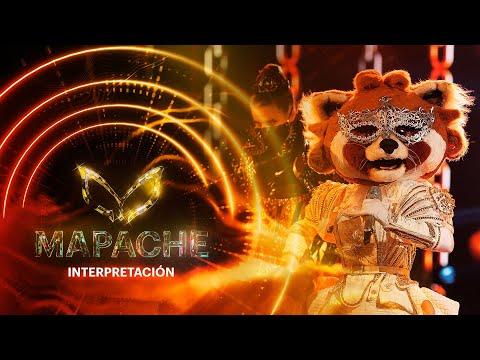 #MapacheEs Escorpión Dorado y Yuri se inspiran para cantar juntos   Interpretación