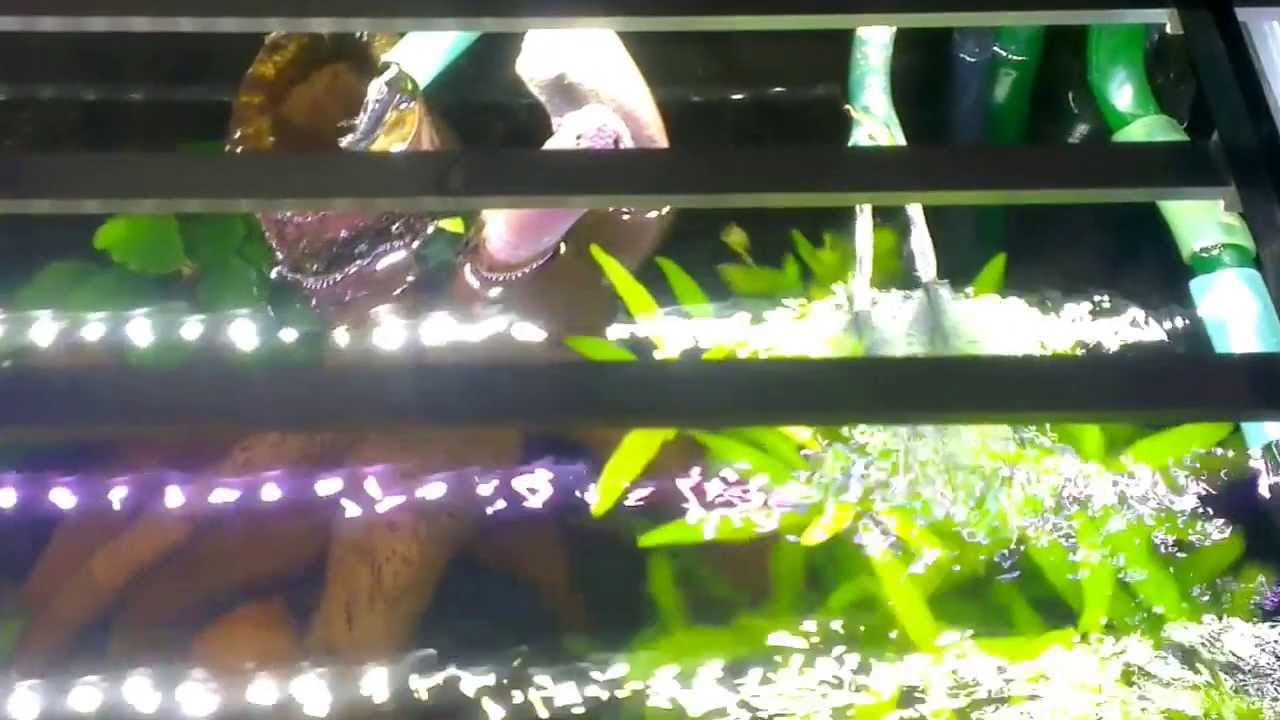 led verlichting aquarium de strips en manier van monteren ophangen