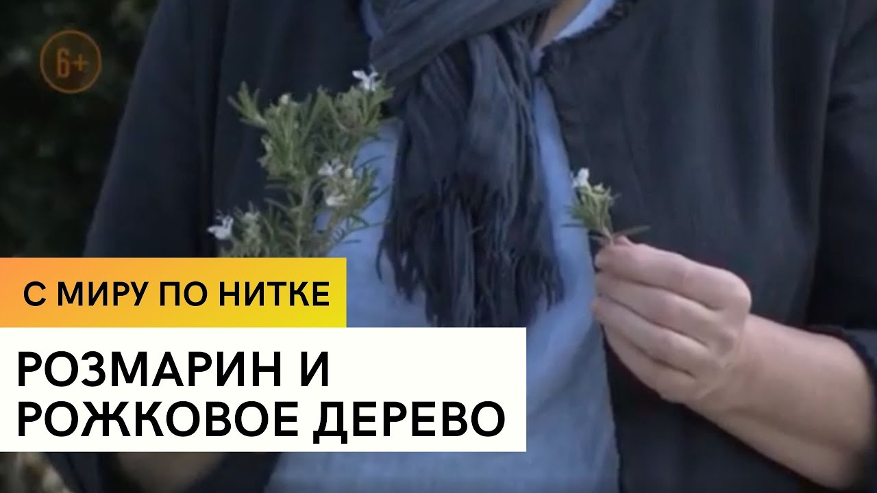 Розмарин и рожковое дерево / С миру по нитке / 9 серия