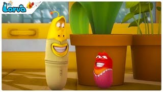 HAPPY FAMILY- BEST of Larva FUNNY Moments