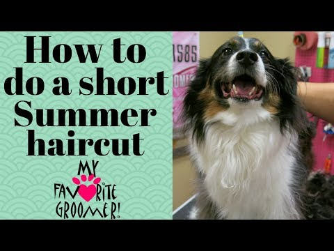 How to give a dog a summer cut
