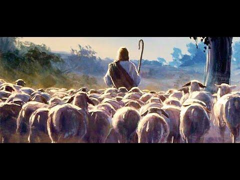 In The Shepherds Fold