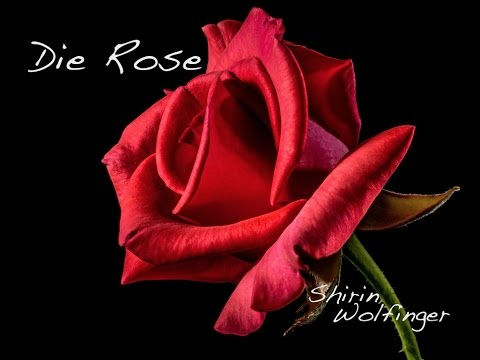 Trauermusik: Die Rose - Helene Fischer Cover by Shirin Wolfinger (Piano Version)